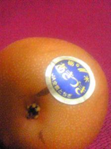 あきづき梨