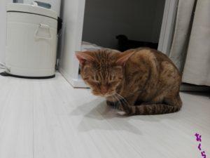 猫のおくら