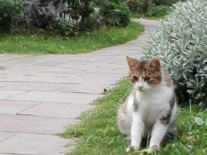 丘公園の猫